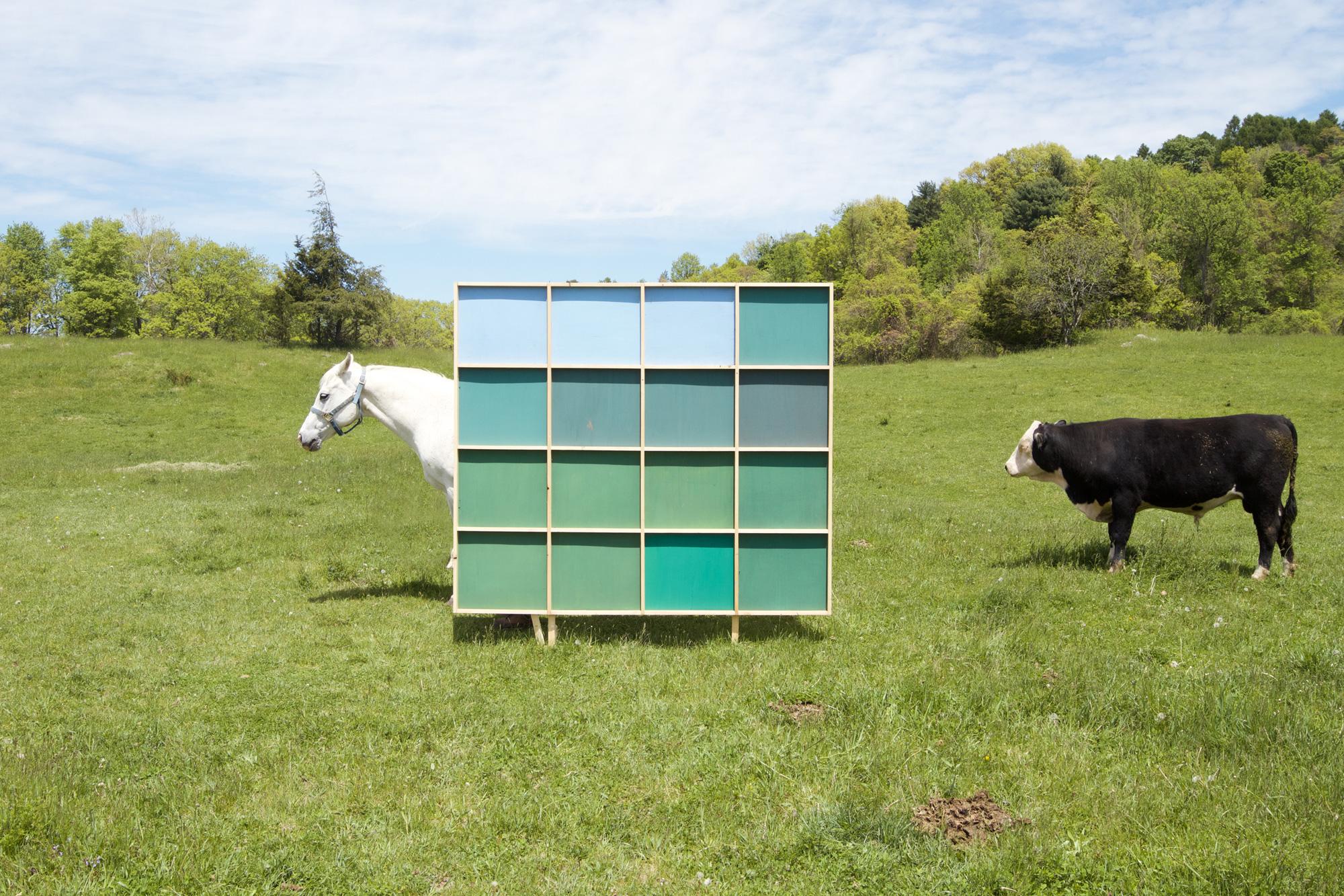 horsebull