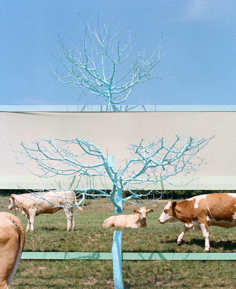 kühe, Installation